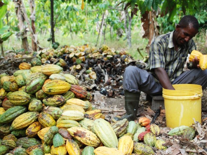 African cacao farmer