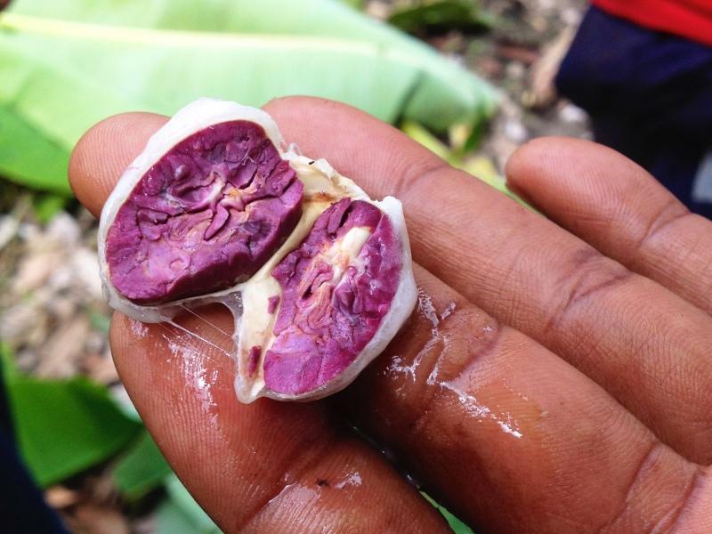 Cut open seed